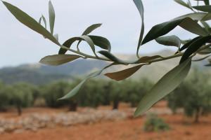 olivera4