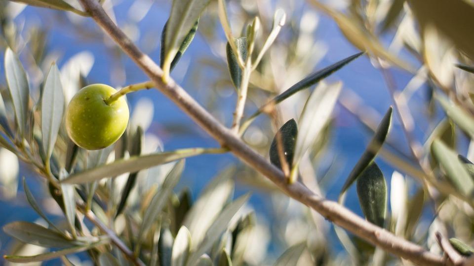 cosmètica bio olivia marius fabre