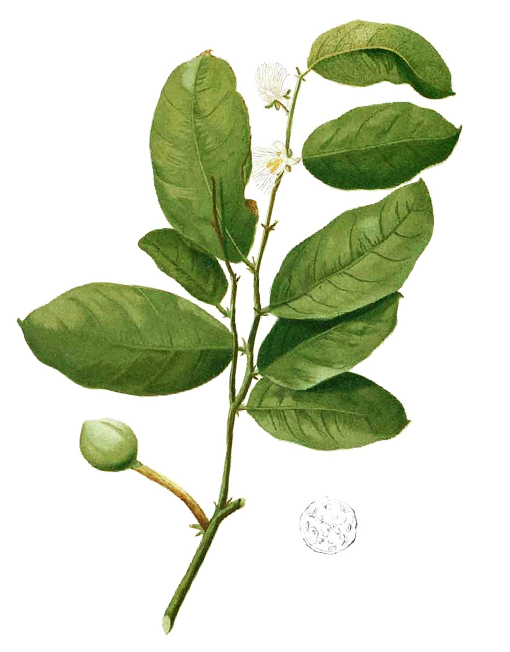 herbari olivia crema hidratant karite