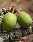 olivia crema hidratant karité