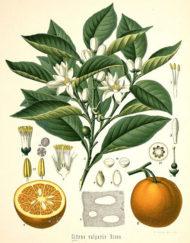 olivia llet corporal mandarina verda 1