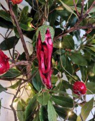 guindilla vidrio decoración árbol de navdad
