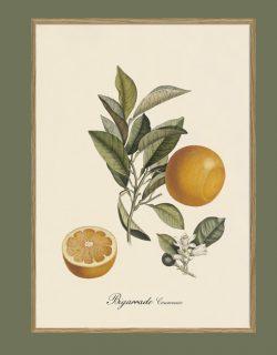 Taronja de València. Il·lustració decorativa emmarcada en fusta de roure.